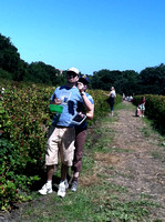 09_Berry Picking