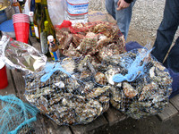 10_Pt Reyes Shucking